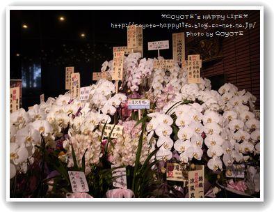お花もたくさん♪.JPG